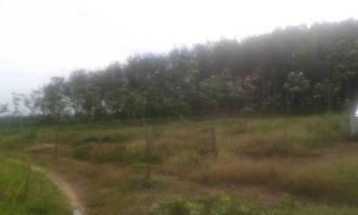 tanah. lot, kebun., getah, untuk, dijual, jual, kedah, pendang, kubor, panjang, kampung, bukit, raja, ladang, geran, ada, sekali, lengkap