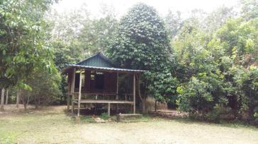 Tanah Kebun Changlun-Kodiang Untuk Dijual_6