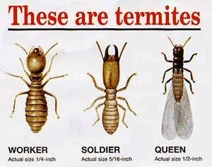 anai, anai-anai, hilangkan, hapuskan, buang, cara, atasi, masalah, tips, rumah, kediaman, perabot, kotak, sarang, makan, gigit, reput, berkesan, basmi, halau, petua, mudah, berkesan, senang, termites, termite, tradisi,